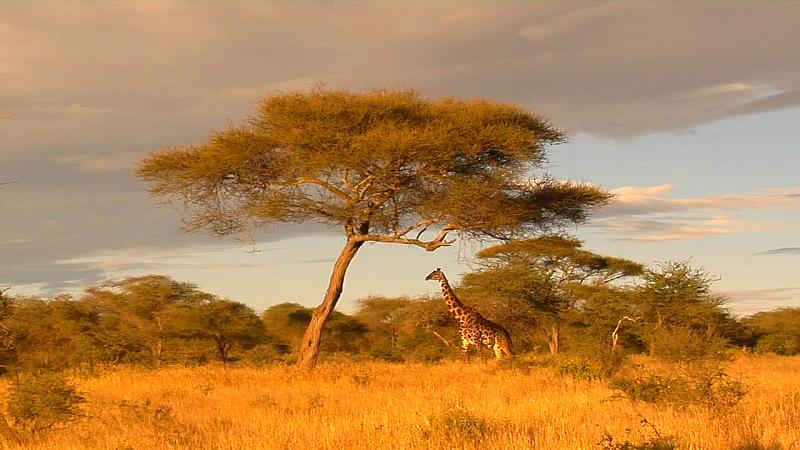 Типичные пейзажи Африки