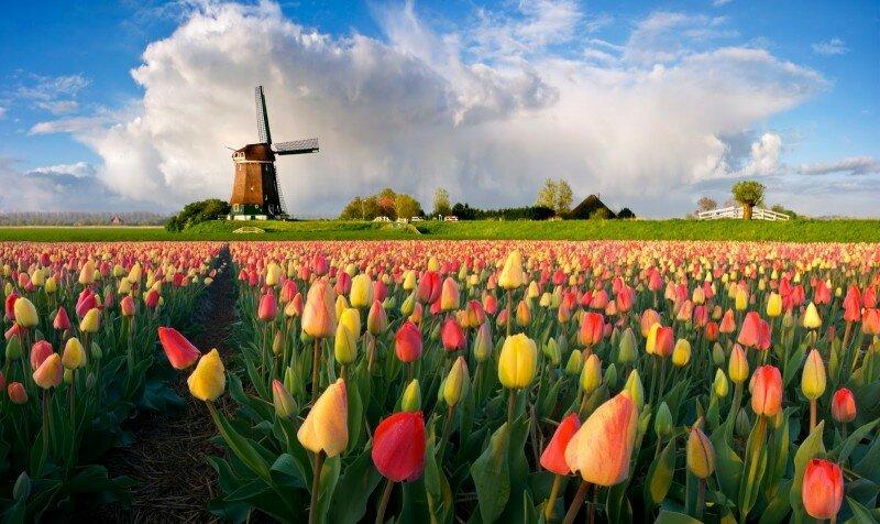 Нидерланды. Интересные факты